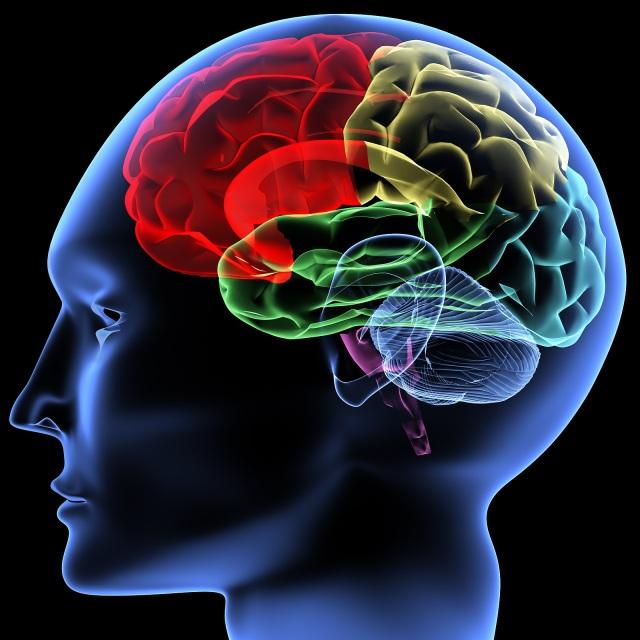 La práctica regular de Mindfulness produce cambios en el cerebro | Francesc Mas